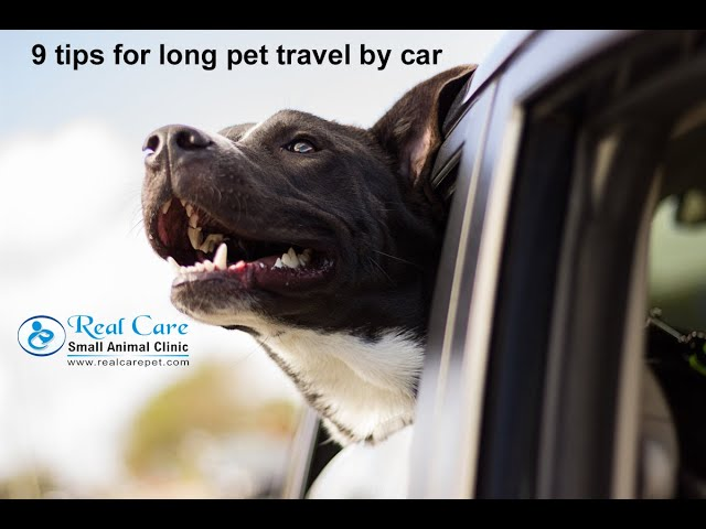 9 Tips to Travel Happily with pets in car for long distance