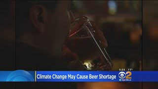 Climate Change Could Lead To Global Beer Shortage: Study