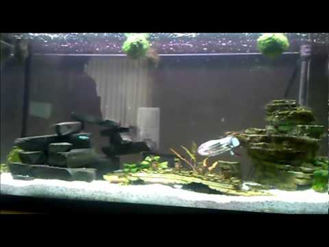 Ode to star wars submarine remote controlled titanic for Star wars fish tank decorations