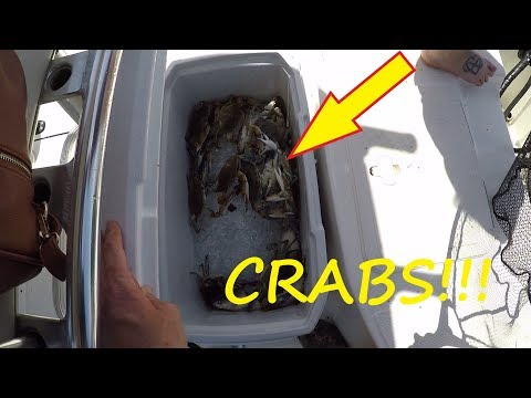 Catching Saltwater Crabs And Fish - Crabbing And Fishing At Marsh Island