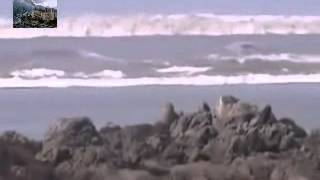 TSUNAMI CAUGHT ON CAMERA THAILAND AMAIZING MUST SEE
