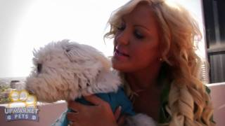 November 2010 - Brynne Edelsten And Her Juddy Our Pet Of The Month