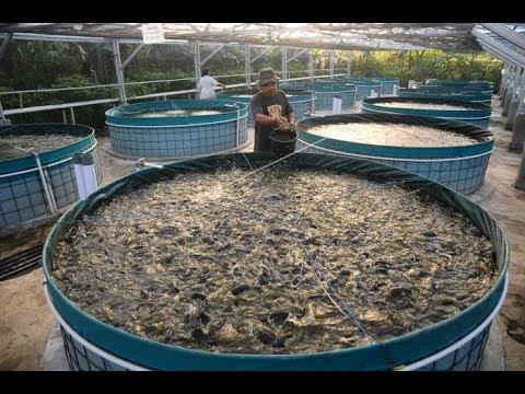 Usaha Budidaya Ikan Lele Dalam Kolam Terpal, 90 Hari Bisa Panen!.