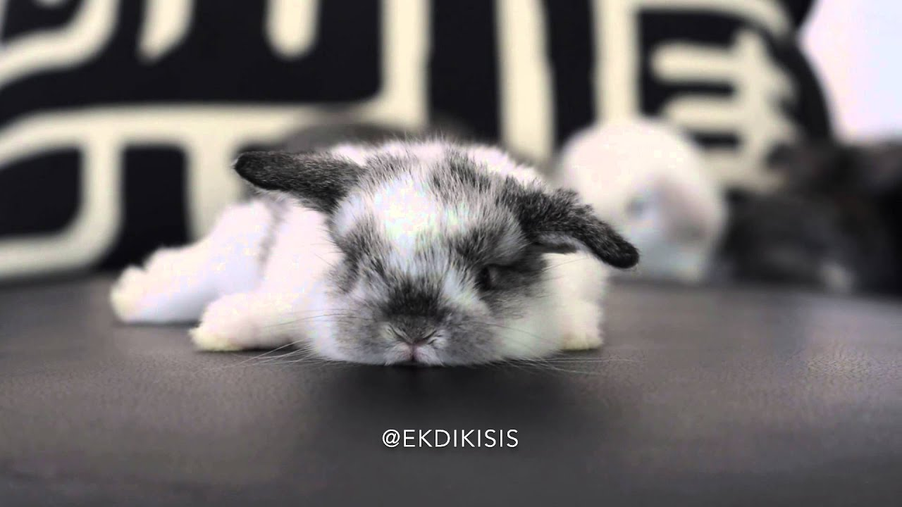 Louie C. X. (@ekdikisis01) • Instagram photos and videos