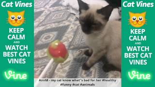 Funniest Cat Vines #107 - Updated September 9th, 2015