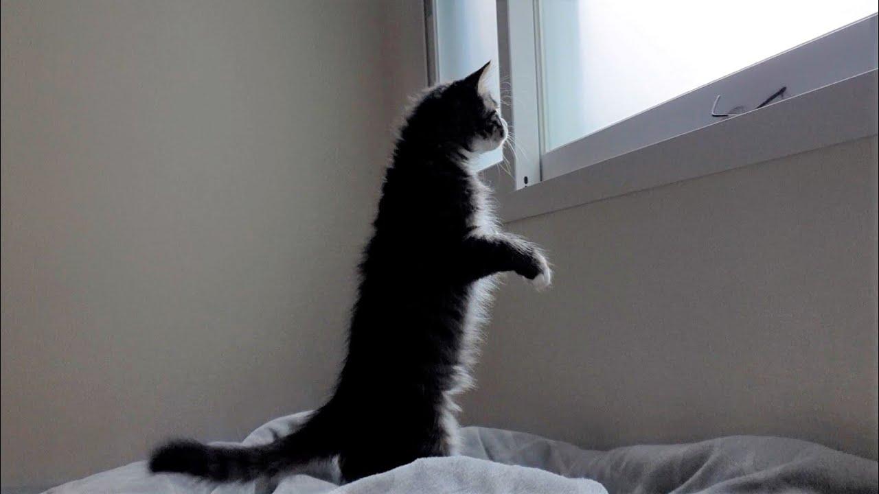 사실 고양이는 이족보행이 가능한 동물입니다ㅋㅋㅋ