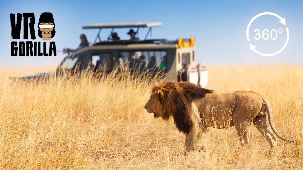 Guided Safari In Queen Elizabeth Park, Uganda (360 VR Video)