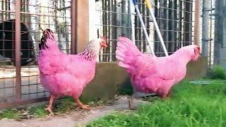 15 Shocking Pink Creatures