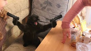 Animals vs People - Funny Animals Get Their Revenge Part 4