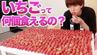 オレって本気出したらいちご何個食べれるの? thumbnail