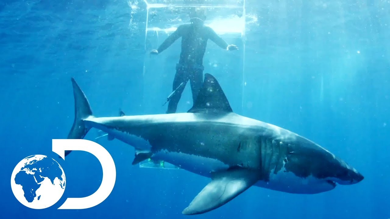 gigantic sharks break into ghost cage island of the mega shark