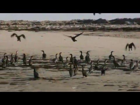 Mauritania Banc d'Arguin Ntl Park