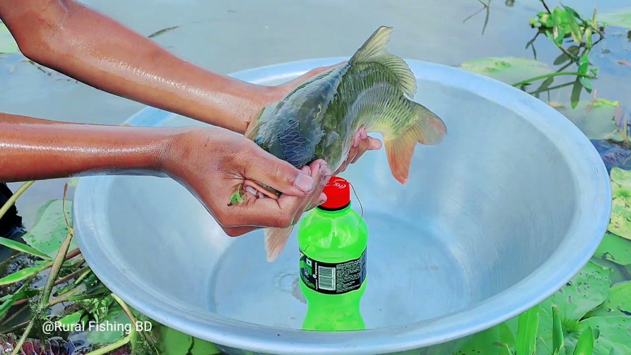 Amazing Fishing Technique | Hook Catch Fish Trap | Village Boy Hook Fishing Trap With Plastic Bottle