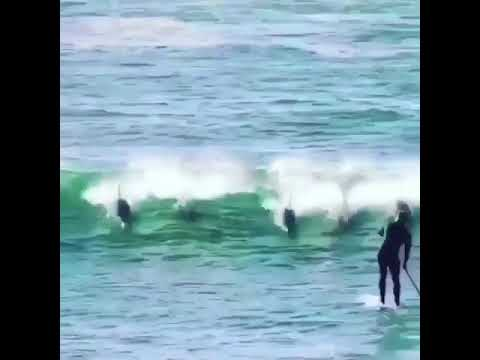 Funny Video: When Nothing Goes Right! (Dolphin Vs SUP Edition)