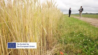 Europe's trade deals: Are European farmers being short-changed? (part 2) • FRANCE 24 English