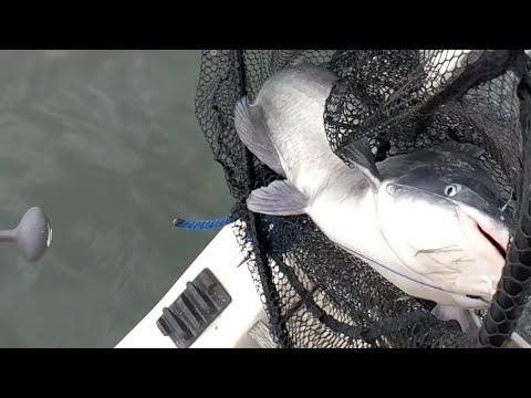 November CATFISHING On The OHIO RIVER
