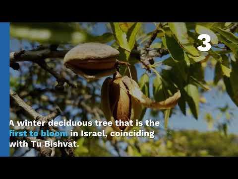 Trees In Israel!