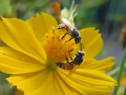 Bees and Flowers (Con ong hút mật) - YouTube