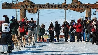 Iditarod Finish And Northern Lights Tour with Wild Alaska Travel