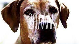 2RAUMWOHNUNG - Bye Bye Bye  (Official Video)