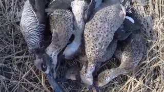 Duck Shooting in Australia 2016 (NSW)