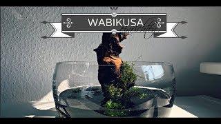 Wabikusa einrichten - Deutsch