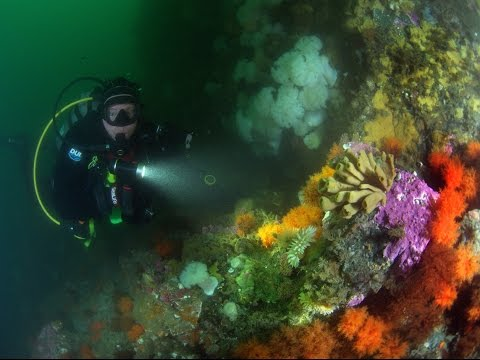 Older Solo Scuba Diver emphasizes importance of cardio workout for general health & fitness.