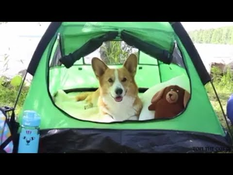Alcott Pup Tent, One Size, Green for Small Dogs