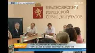 Контракт на отлов бродячих собак в Красноярске может быть расторгнут