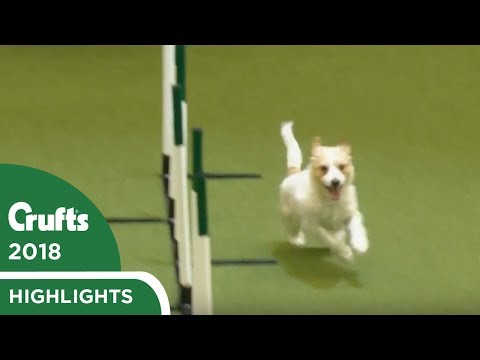 Olly Returns to Crufts! Jack Russell Goes Crazy Again at Crufts 2018
