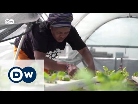 Going green in downtown Johannesburg | Eco-at-Africa