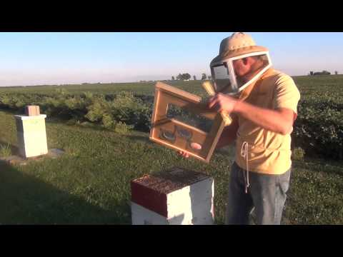 How To Feed Honey Bees
