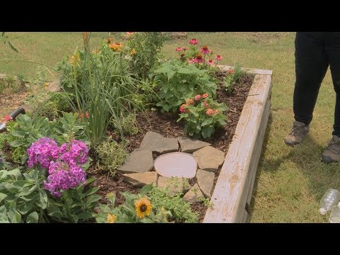 Planting a Butterfly Garden – Family Plot