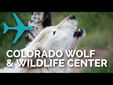 Vegan Travel to Colorado Wolf & Wildlife Center