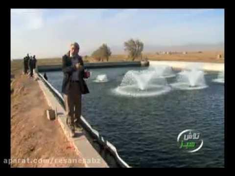 پرورش ماهی قزل آلا - برنامه تلاش سبز