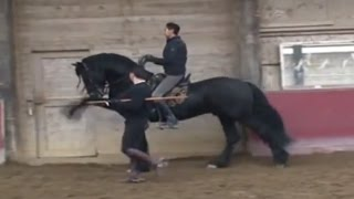 How to Teach Your Horse To Do the Spanish Walk
