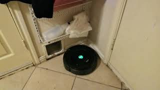 Roomba Cleans Laundry Room. Very Satisfying 10 min.