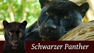Der schwarze Panther (Black Panther)