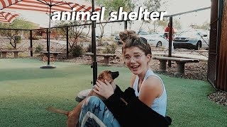 volunteering at an animal shelter...