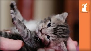 Precious Baby Kitty Loves Her Mommy So Much - Kitten Love