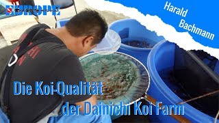 Die Koi-Qualität der Dainichi Koi Farm