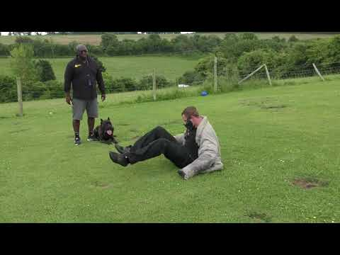 Fit For Purpose Cane Corso Personal Protection Training