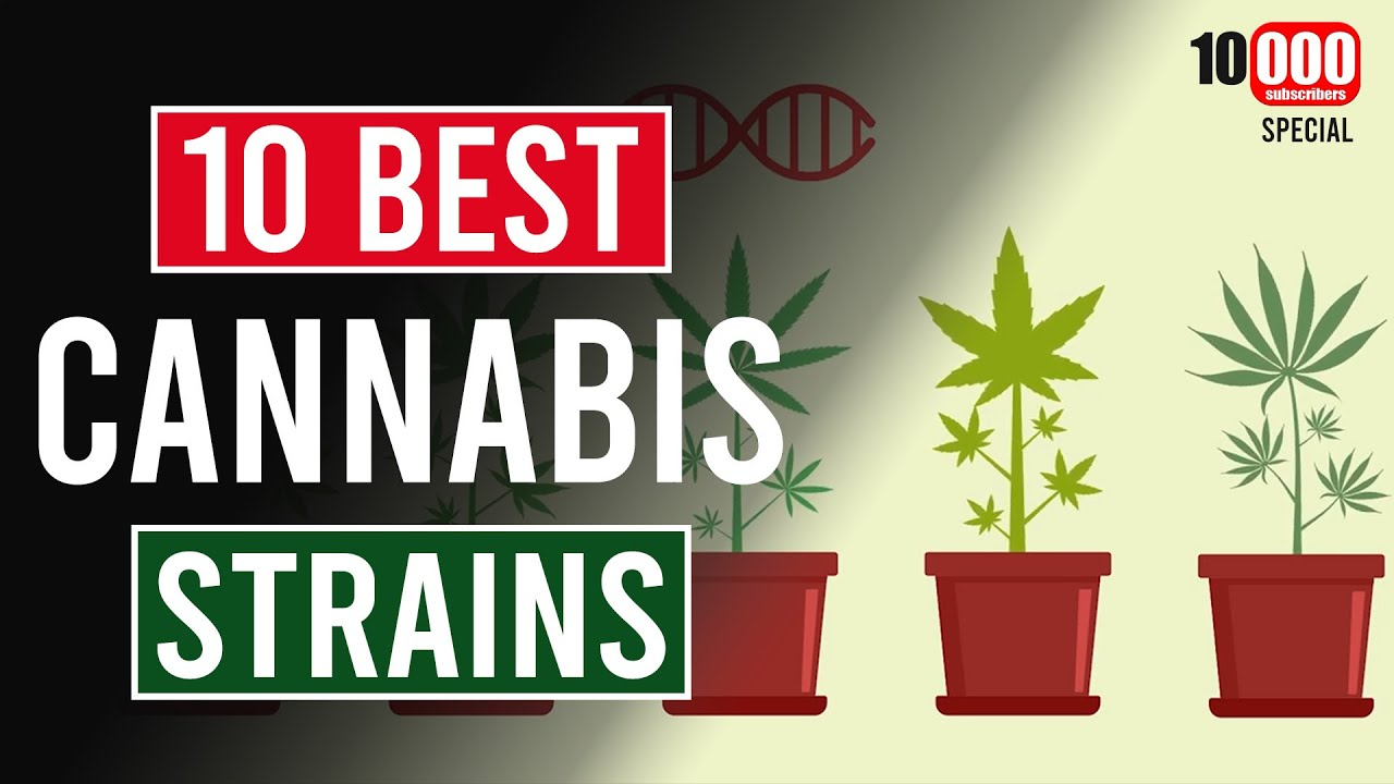 The 10 BEST Cannabis Strains! As Voted for by You