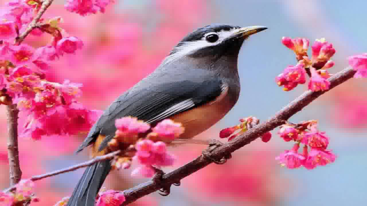 Beautiful Birds Wallpapers - YouTube