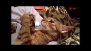 Кошки! Улыбнись 4