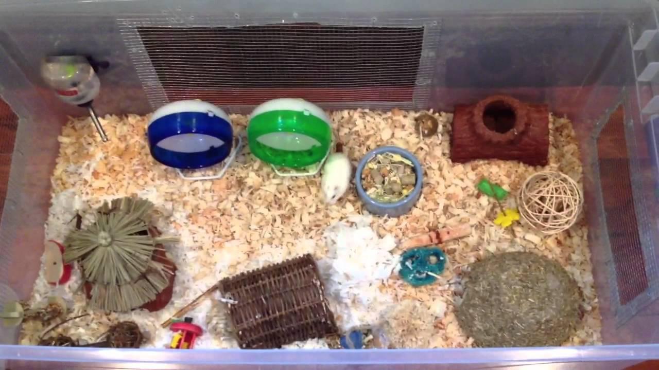 Hamster Bin Cage Youtube