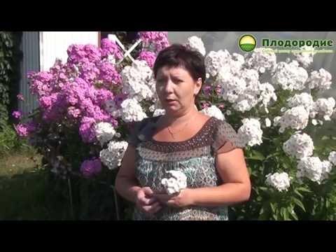 видео: Природное земледелие и красота! В гостях у Ольги Якуповой