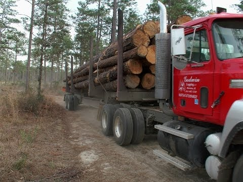 Harvesting Lumber in the Geneva State Forest