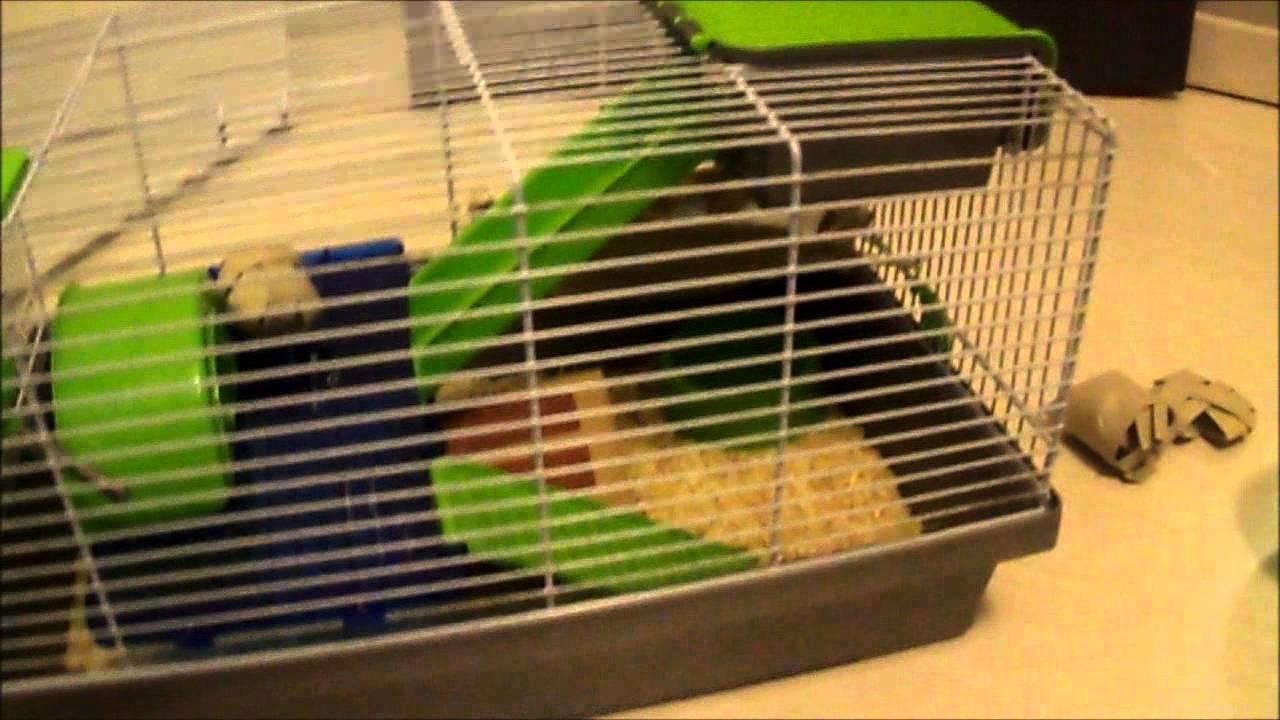 Ce qu 39 il faut pour un hamster russe youtube for Quel sol pour un poulailler