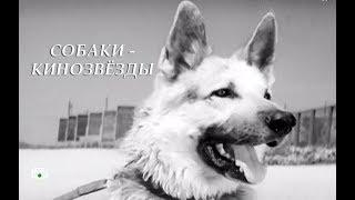 СОБАКИ–КИНОЗВЁЗДЫ: Мухтары съемочных площадок (2018)